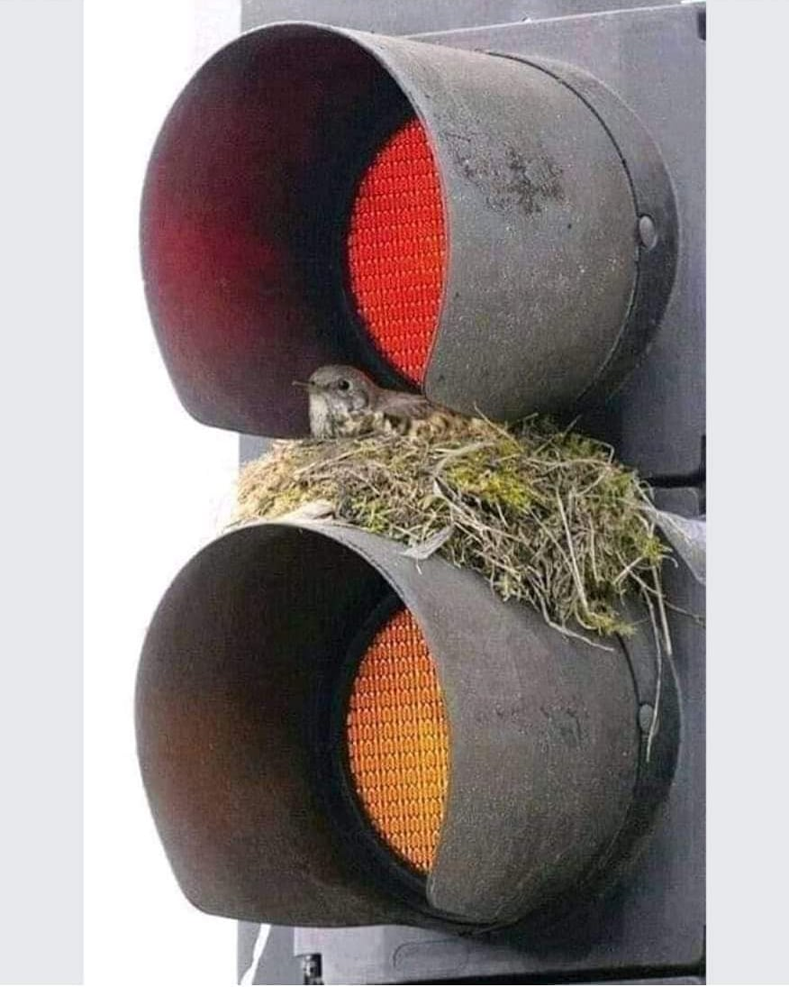 Found this telling picture on the social media. To what extent are we neglecting environment in our constant race for development? But this little bird teaches us, how to find a way out for a happy living under any situation. #development #nature #birds #solution #MPS #SHROFFism https://t.co/7UYDvEOkTo