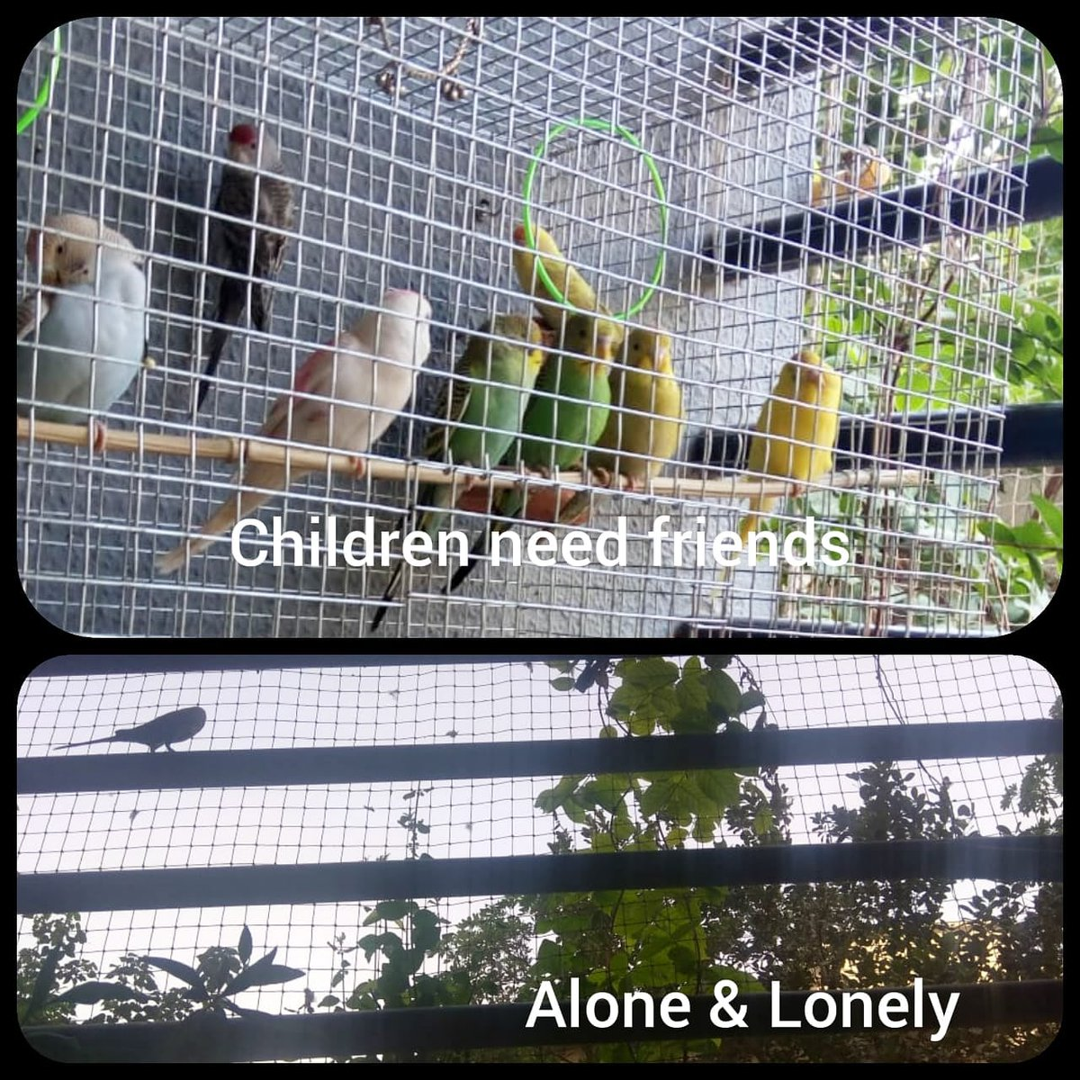 This picture brings out a contrast. Though caged friends create a difference.  The extended Corona situation is creating concerns about children's psychological development. Children need friends to play and grow. Playgrounds are empty. Schools are empty. #Missing #schools#MPS https://t.co/o5ptQMhm2d