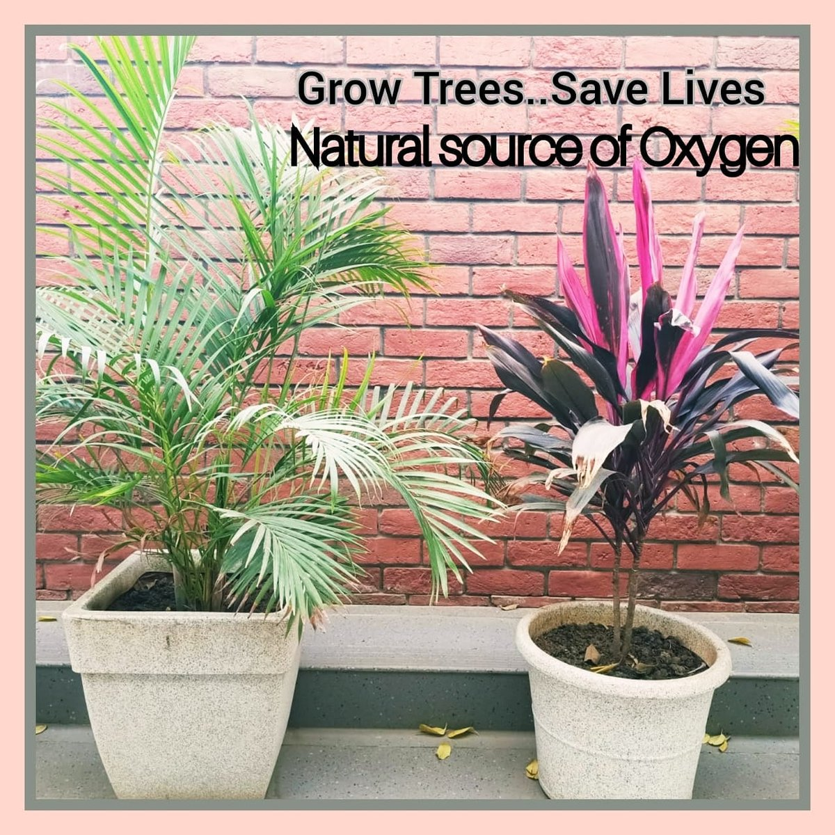 Trees are essential to our Lives. Trees are a natural source of Oxygen.  Let's pledge to Grow Trees and Save Human Lives.  #trees #naturaloxygen #growmoretrees #plants #positivity  #staysafe #stayhome #SupportHumanity #SHROFFism #manjulapoojashroff #MPS https://t.co/3Ls0mzRa66